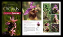 The Bee Orchids of Greece – The genus Ophrys